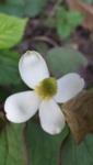f:id:adayasu:20100513174428j:image:left