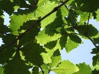 f:id:adayasu:20100823133212j:image:left