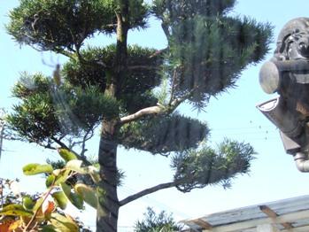 f:id:adayasu:20101010084211j:image:left