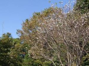 f:id:adayasu:20101105092733j:image:left