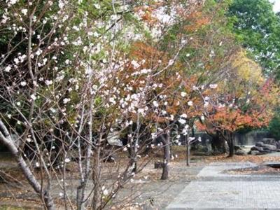 f:id:adayasu:20101125091336j:image:left
