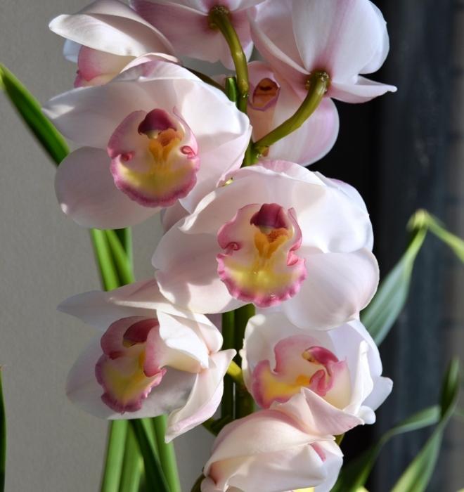 f:id:adayasu:20110226164945j:image:left
