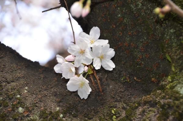 f:id:adayasu:20110326164755j:image:left