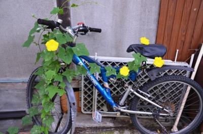 f:id:adayasu:20110721073133j:image:left