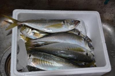 f:id:adayasu:20111227194101j:image:left