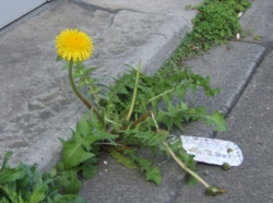 f:id:adayasu:20120405091153j:image:left