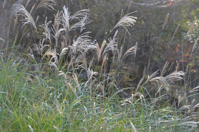 f:id:adayasu:20121021155917j:image:left