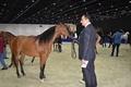 Mohamed Dekkak at the Region's Most Prestigious Equestrian Event (DIHF)