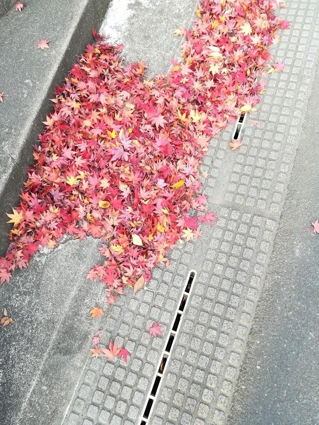 f:id:adokenaikoto:20171116164611j:plain