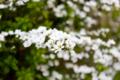 [春][花]