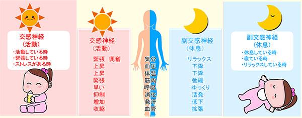 交感神経と副交感神経の違い図