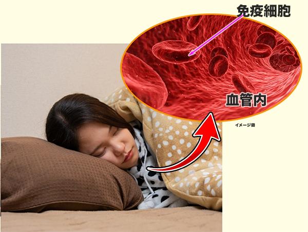 眠っている間に血管内で活躍する免疫細胞
