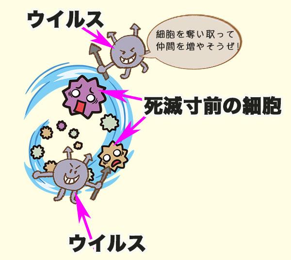 ウイルスが細胞へ侵入する図