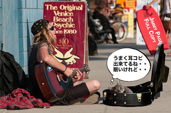 耳コピしているストリートミュージシャンと猫