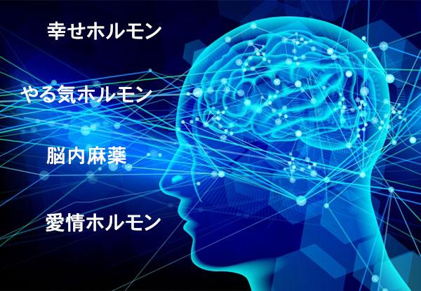 脳内物質の働き
