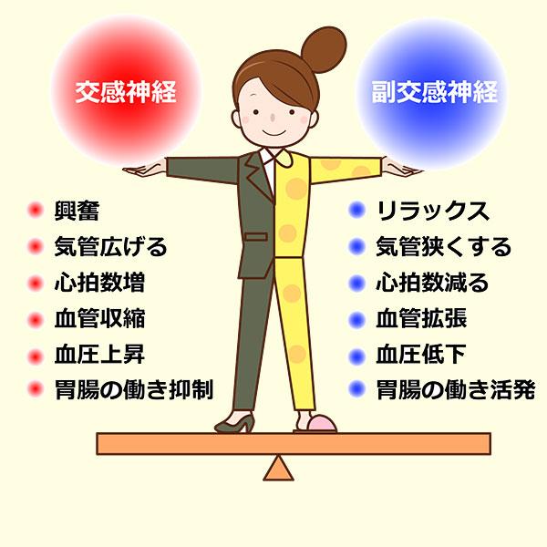 自律神経の交感神経と副交感神経のバランス