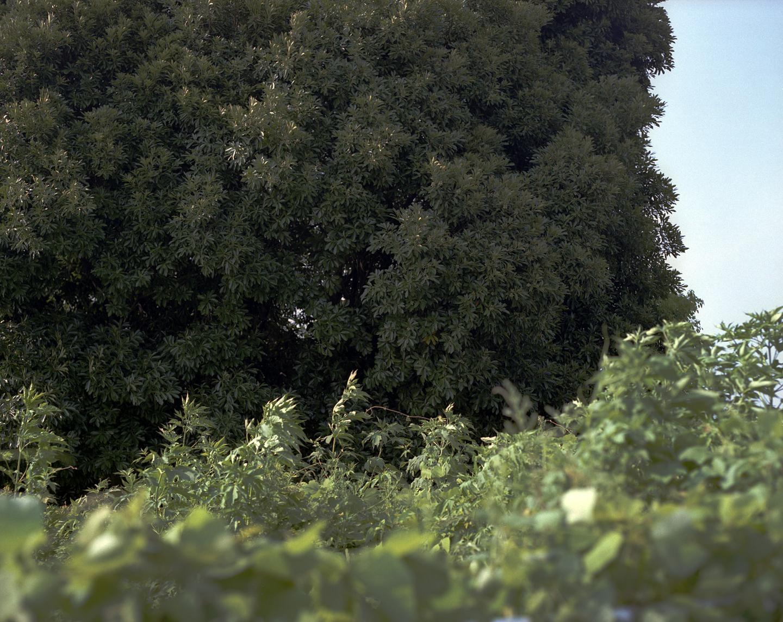 f:id:afji:20080816121024j:image