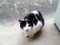 部屋前の野良猫02。