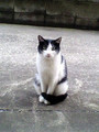 部屋前の野良猫01。