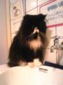 [ねこ][猫カフェ]猫だ!カフェ。