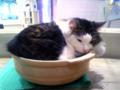 [ねこ][猫カフェ][猫鍋]猫だ!カフェ。
