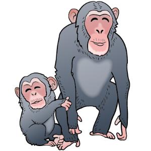 チンパンジー母子
