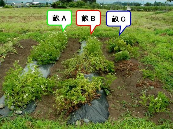 f:id:agri-connect:20180805222050j:plain