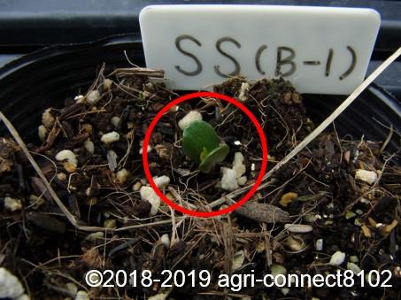 f:id:agri-connect:20190320222851j:plain
