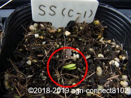 f:id:agri-connect:20190320222921j:plain