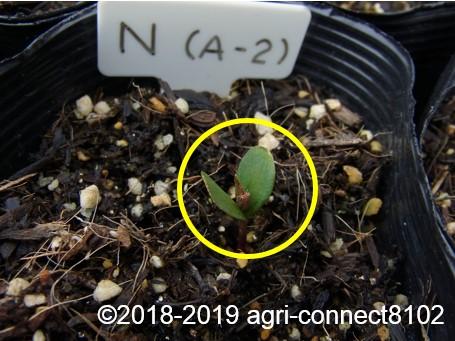 f:id:agri-connect:20190320223928j:plain