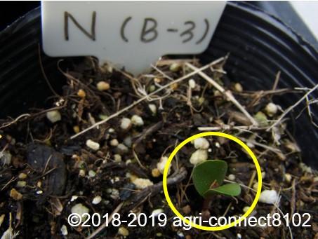 f:id:agri-connect:20190320224016j:plain