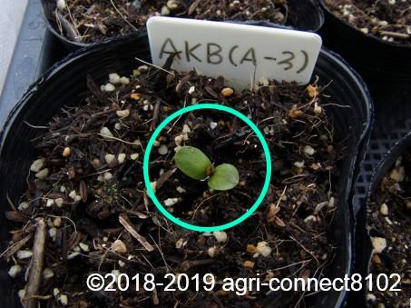 f:id:agri-connect:20190320225923j:plain