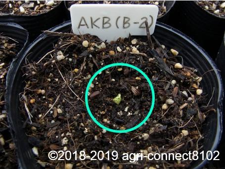 f:id:agri-connect:20190320225933j:plain