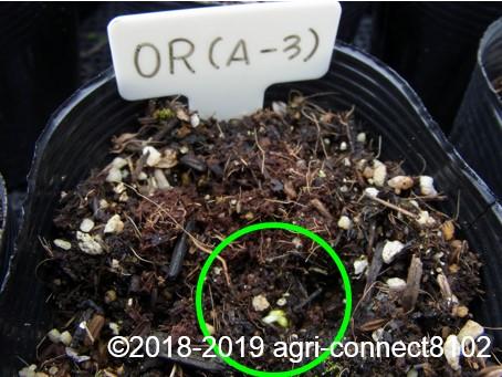 f:id:agri-connect:20190320230118j:plain