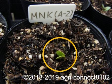 f:id:agri-connect:20190320230201j:plain
