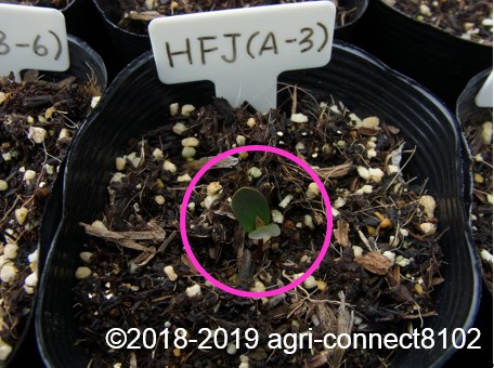 f:id:agri-connect:20190320230236j:plain
