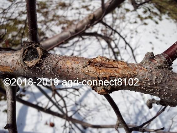 f:id:agri-connect:20190329210354j:plain
