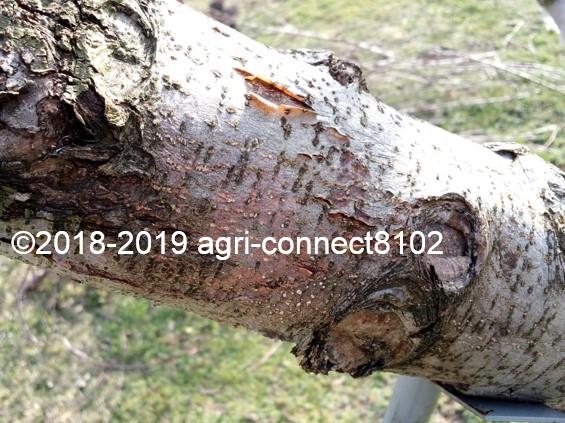 f:id:agri-connect:20190329210405j:plain