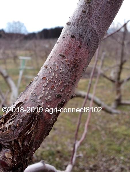 f:id:agri-connect:20190329212633j:plain