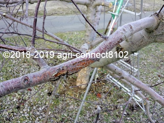 f:id:agri-connect:20190329214302j:plain