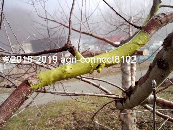 f:id:agri-connect:20190329214331j:plain