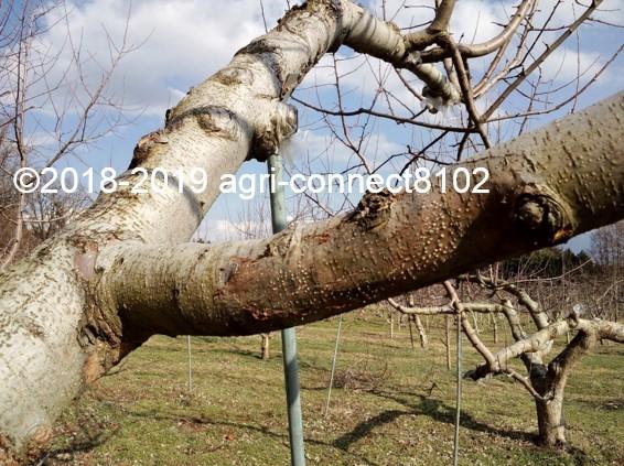 f:id:agri-connect:20190329215839j:plain
