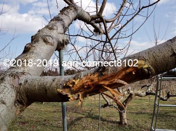 f:id:agri-connect:20190329215851j:plain