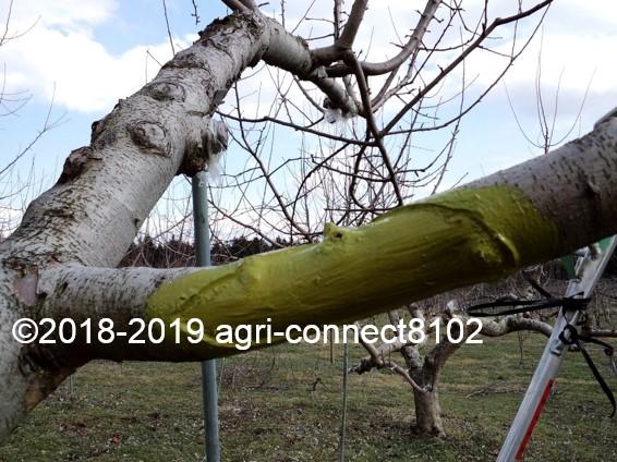 f:id:agri-connect:20190329215914j:plain