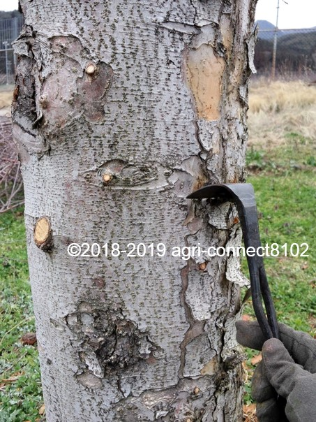 f:id:agri-connect:20190404203757j:plain