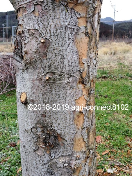 f:id:agri-connect:20190404203810j:plain