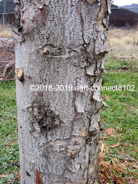 f:id:agri-connect:20190404204118j:plain