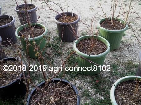 f:id:agri-connect:20190405221852j:plain