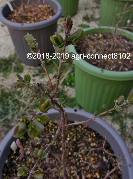 f:id:agri-connect:20190405222604j:plain
