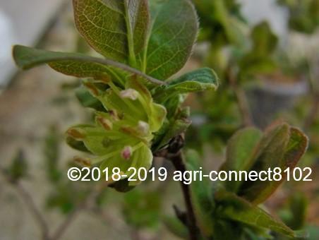 f:id:agri-connect:20190405223507j:plain